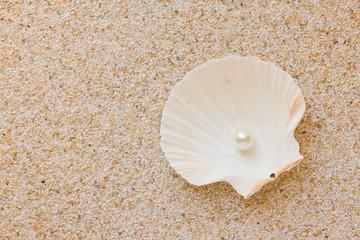 Pearl in sea shell