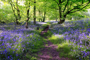 Self adhesive Wall Murals Forest Blue bells forest