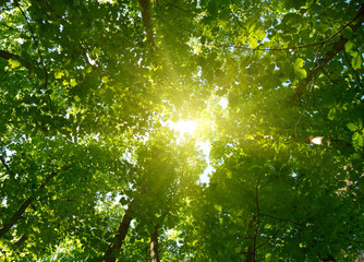 Sun in deep forest background