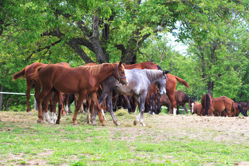 Young horses on the farm