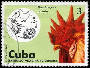 CUBA - CIRCA 1975 Rooster