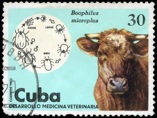 CUBA - CIRCA 1975 Cow