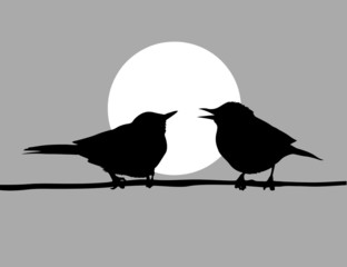 drawing two birds