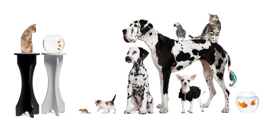Group portrait of animals in front of black and white background