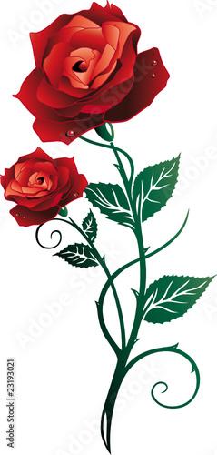 rose rosen liebe love blumen bl ten floral rot. Black Bedroom Furniture Sets. Home Design Ideas
