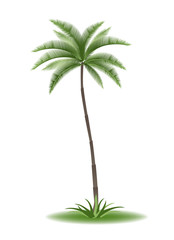 tropical palm tree with green leaves vector illustration
