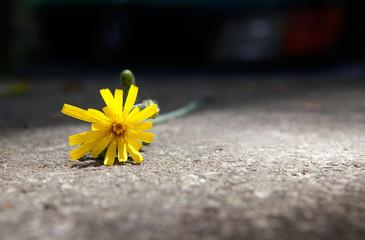 flor amarilla en el suelo
