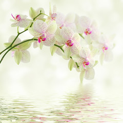 Biała orchidea na lekkim tle