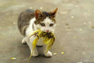 Cat with hunted budgie