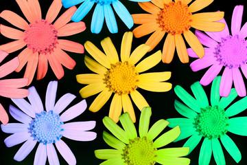 Multicolor camomiles
