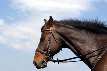 Horse head against the sky