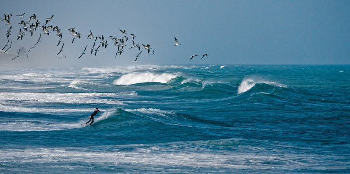 Black Smimmers With Surfer.