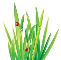 fresh green grass with ladybirds