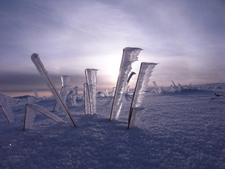 Ice Flags