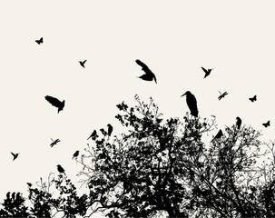 Acrylic Prints Birds on tree tree and bird