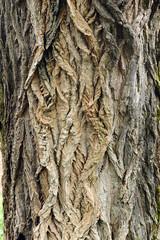 alberi 969