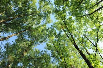 alberi 1018