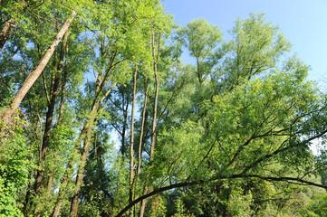 alberi 1019