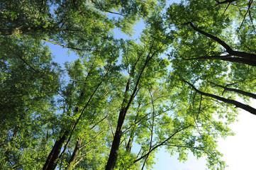 alberi 1020