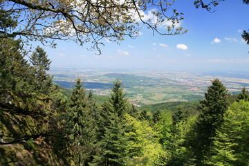Plaine d'Alsace vue du Mont Sainte-Odile