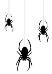 Spider2010