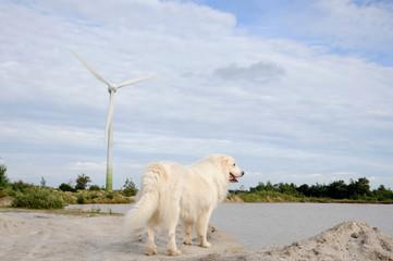 Wall Mural - Hund am Baggersee mit Windrad