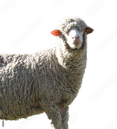 mouton d tour photo libre de droits sur la banque d 39 images image 23367095. Black Bedroom Furniture Sets. Home Design Ideas