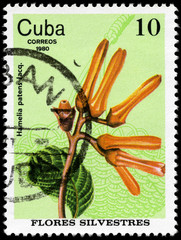 CUBA - CIRCA 1980 Hamelia