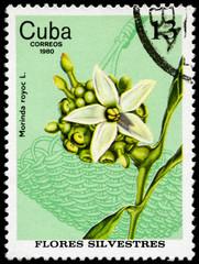 CUBA - CIRCA 1980 Morinda