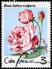 CUBA - CIRCA 1979 Rose
