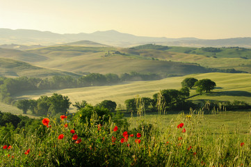 Toskana Huegel  - Tuscany hills 18