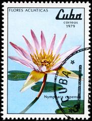 CUBA - CIRCA 1979 Nymphaea