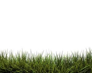 grass background/