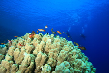 Mountain Coral with Scuba Divers in background
