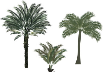 three palm trees on white