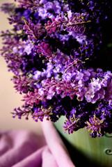 Fototapeta lavender obraz