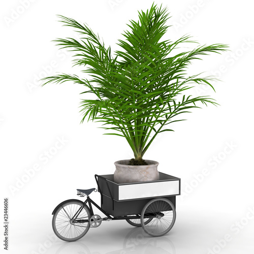 palme im topf auf einem fahrradtransporter stockfotos und lizenzfreie bilder auf. Black Bedroom Furniture Sets. Home Design Ideas
