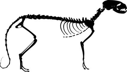 esqueleto de cão