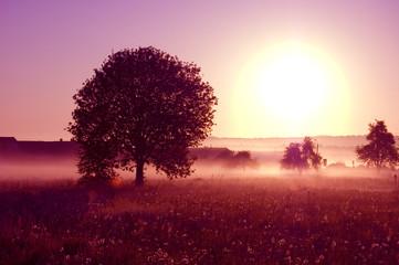 Photo sur Plexiglas Bordeaux Sunrise.