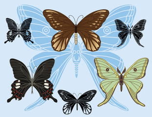 set of colored butterflies and stencils