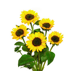 Bouquet of sunflowers, isolated on white background