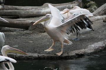 Pelikan Gruppe