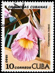 CUBA - CIRCA 1980  Cattleyopsis