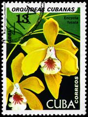 CUBA - CIRCA 1980 Encyclia