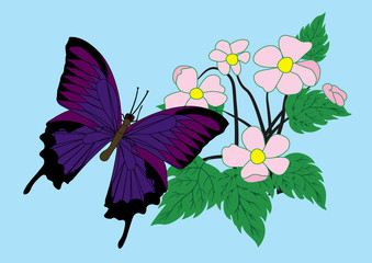 Butterfly and flowers. vector