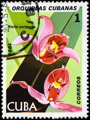 CUBA - CIRCA 1980 Bletia