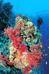 Female diver exploring colorful soft corals
