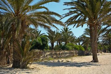 Sea's beach with green palms