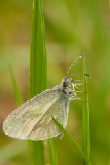 Buttefly sitting in grass