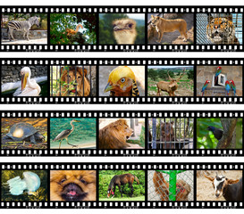 Animals in frames of film